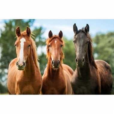 3d magneten bruine paarden