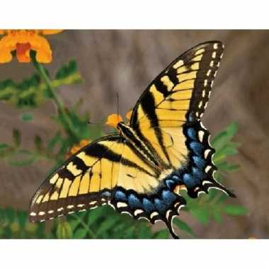 3d magneten met gele vlinder