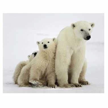 3d magneten met ijsberen
