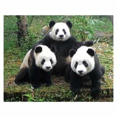 3d magneten met pandaberen