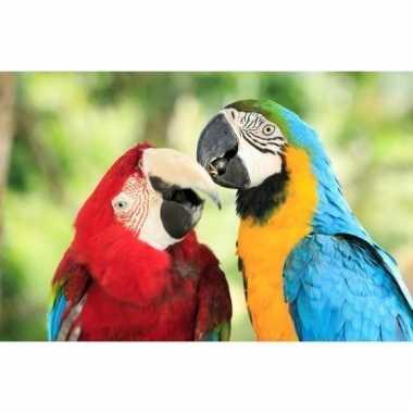 3d magneten met papegaaien