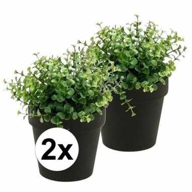Afgeprijsde 2x nep eucalyptus plant groen in zwarte pot kunstplant