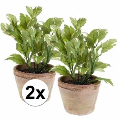 Afgeprijsde 2x nep laurier kruiden plant groen in oude terracotta pot