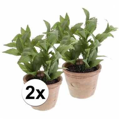 Afgeprijsde 2x nep munt kruiden plant groen in oude terracotta pot ku