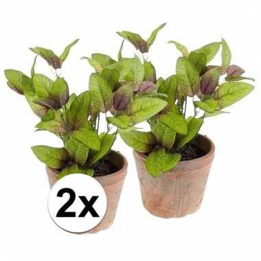 Afgeprijsde 2x nep salie kruiden plant groen in oude terracotta pot k