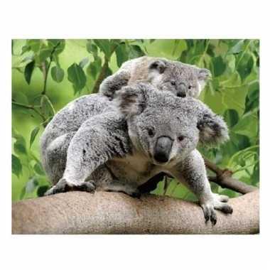 Afgeprijsde 3d magneten koala beertjes