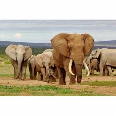 Afgeprijsde 3d magneten met olifanten