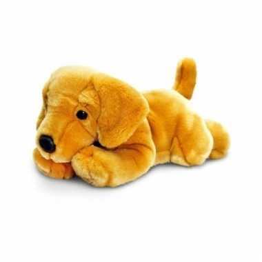 Blonde labrador pup 35 cm