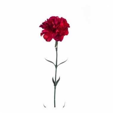 Dianthus anjer kunstbloem 65 cm rood