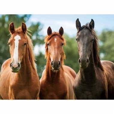 Dieren placemats paard