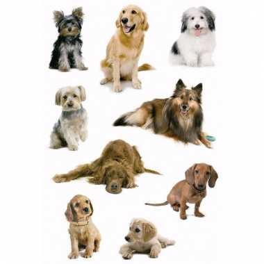 Dieren stickers hondjes 3 stuks