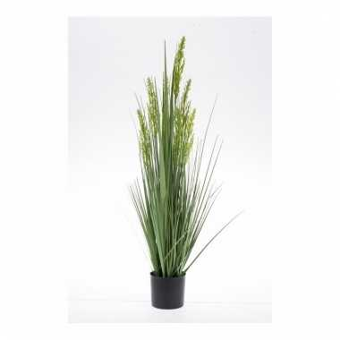 Gras nepplant in pot 90 cm