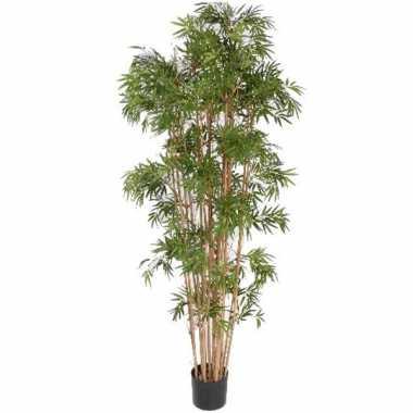 Hawaii bamboe boom 150 cm