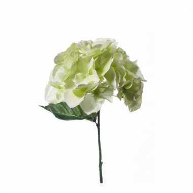 Hydrangea nep tak 28 cm wit/groen