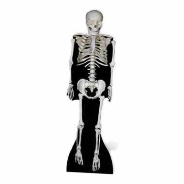 Skelet decoratie bord
