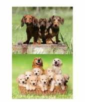 Afgeprijsde 2 stuks 3d magneten met honden