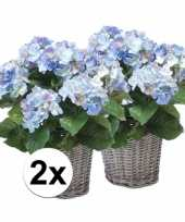 Afgeprijsde 2x blauwe hortensia nepplant in mand 45 cm