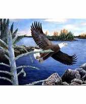 Afgeprijsde dieren placemats roofvogel