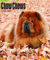 Rashonden kalender chow chows 2018